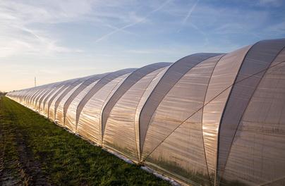 科莱恩为中国农用薄膜生产商提供聚合物添加剂解决方案
