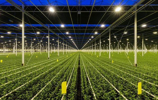 艾迈斯欧司朗推出新款白光LED,提供高效的植物照明解决方案